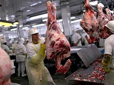 Разнорабочие в убойный цех при мясокомбинате и на мясокомбинат в Польше