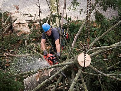 Вакансия работника лесного хозяйства в Литве