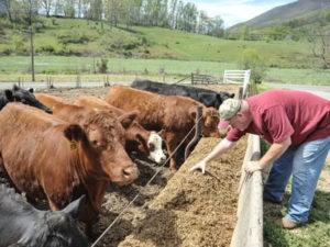 Работа на ферме в Эстонии