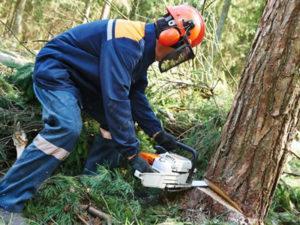 Работа для лесоруба в Латвии