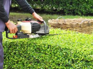 Робота для садівника в Німеччині