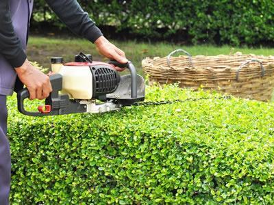 Вакансия для садовника в Германии