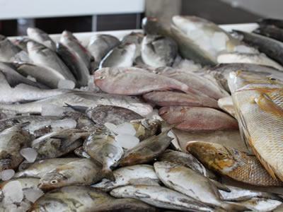 Вакансия для разнорабочего на рыбзавод в Швеции