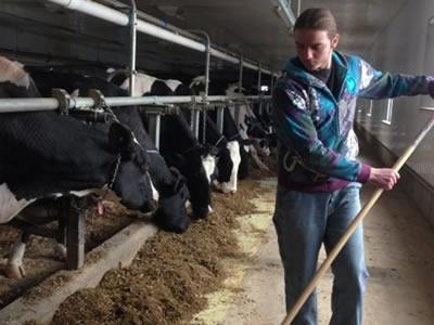 Вакансия для работника на молочной ферме в Латвии