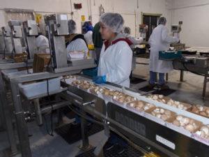 Работа для студентов на кондитерской фабрике