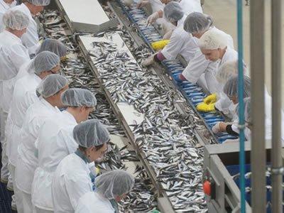 Вакансія пакувальника і сортувальника рибної продукції на рибзаводі в Бидгощ, Польща