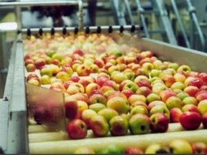 Работа на производстве фруктовых и овощных соков