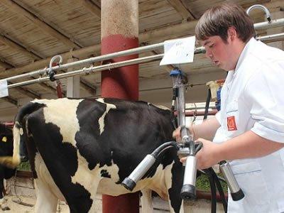 Вакансия для работника на молочной ферме в Германии