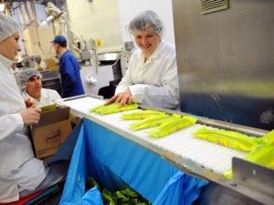 Работа для упаковщика мороженого на производстве