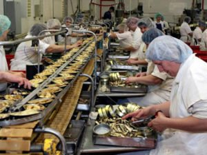 Работа на рыбном заводе по изготовлению консервов