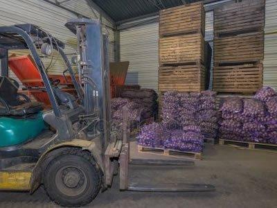 Сортировка картофеля на складе в Польше