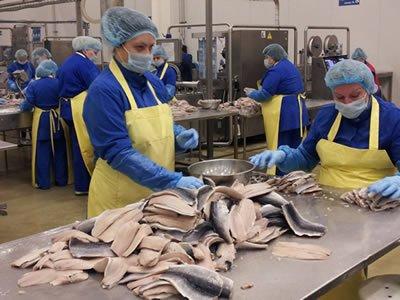 Вакансия для работника на рыбзавод «LISNER″ в Польше