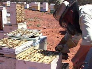 Робота на бджільництві по переробці і розливу меду