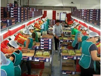 Вакансія для сезонного робітника на виробництво овочів в Німеччині