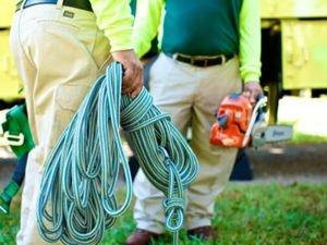 Работа для помощника лесоруба по уходу за зелеными насаждениями