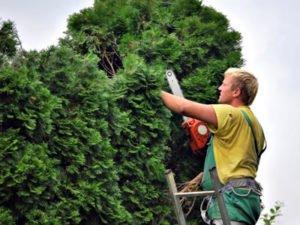 Робота для садівника