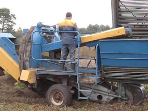 Работа в сельском хозяйстве, уборка овощей