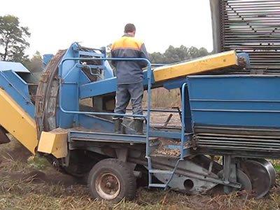 Нужны работники на уборку овощей в Литве