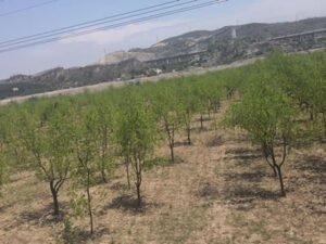 Работа для садовника по высадке деревьев