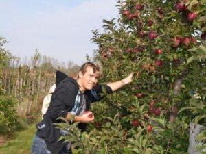 Работа для студентов по сбору яблок, груш