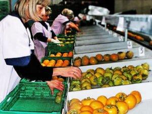 Стажування для студентів на овочевому заводі