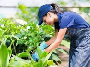 Робота для студентів по догляду за квітами