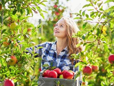 Сельскохозяйственная стажировка для студентов  в Германии