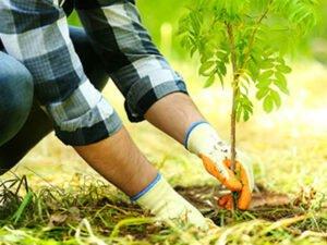 Робота по посадці ліс