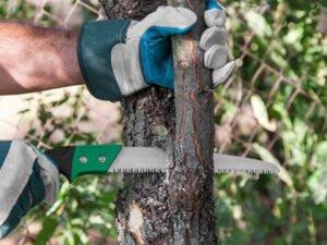 Работа для студентов по уходу за деревьями