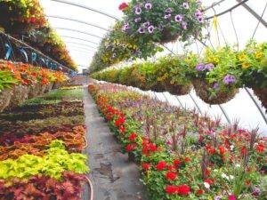 Работа для студентов на производстве декоративных растений