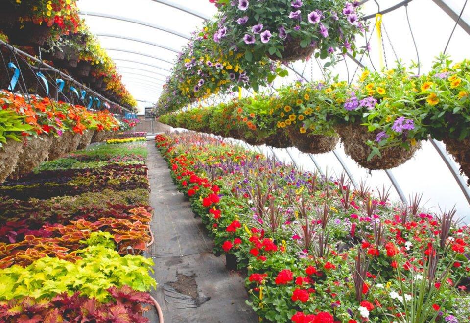 Стажування для студентів з вирощування декоративних рослин в Німеччині