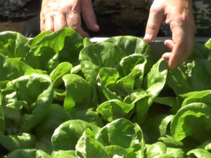 Робота для студентів в сільському господарстві на збирання врожаю